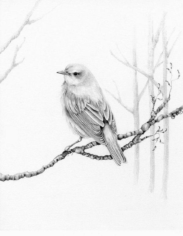 طراحی پرندگان