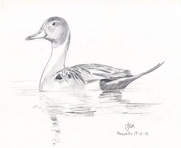 نقاشی طرح پرنده