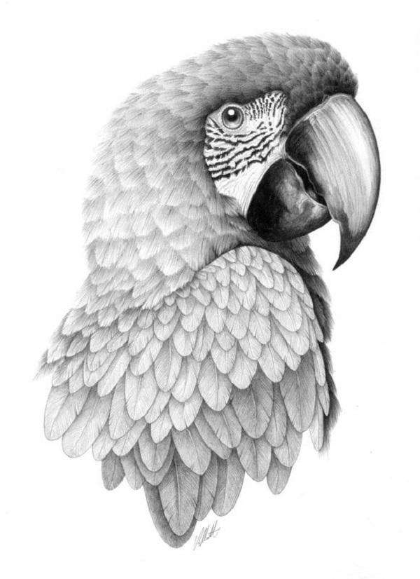 سیاه قلم پرنده