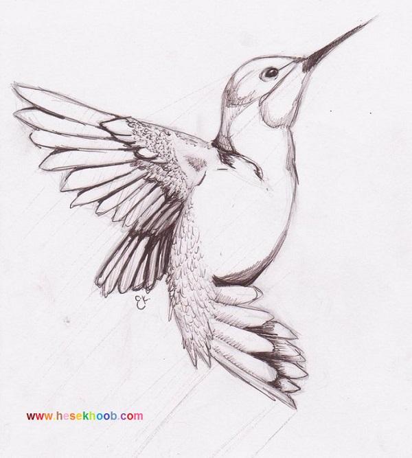طراحی سیاه قلم از پرندگان