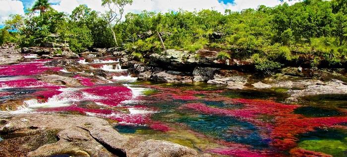 رودخانه کانو کریستال