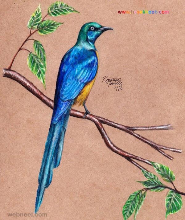 نقاشی پرنده با مداد