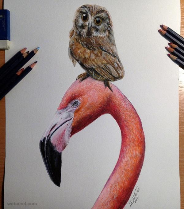 طراحی پرنده ها