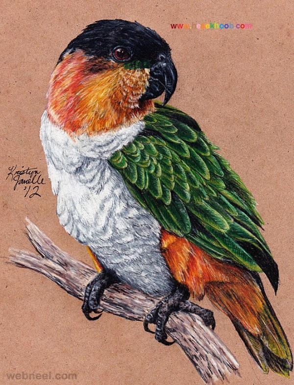 طرح نقاشی طوطی