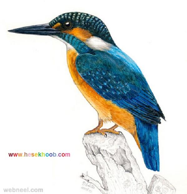 نقاشی پرندگان با مدادرنگی