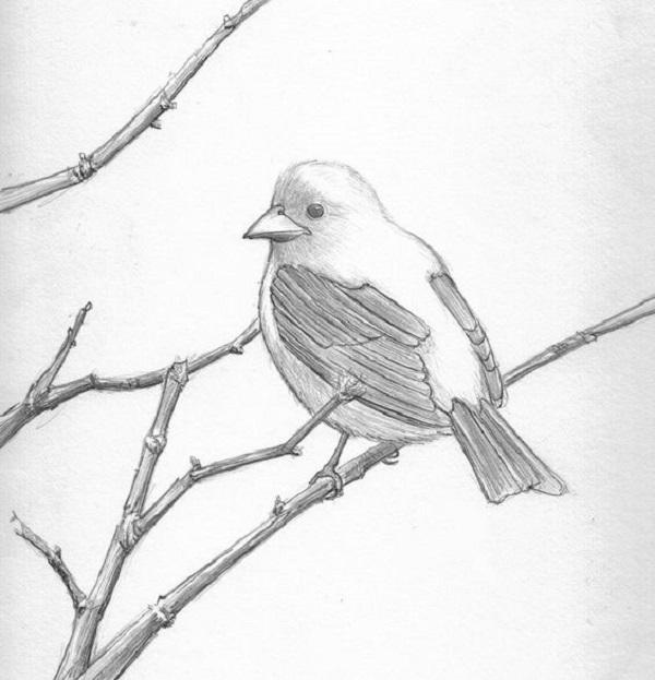 طرح نقاشی پرنده