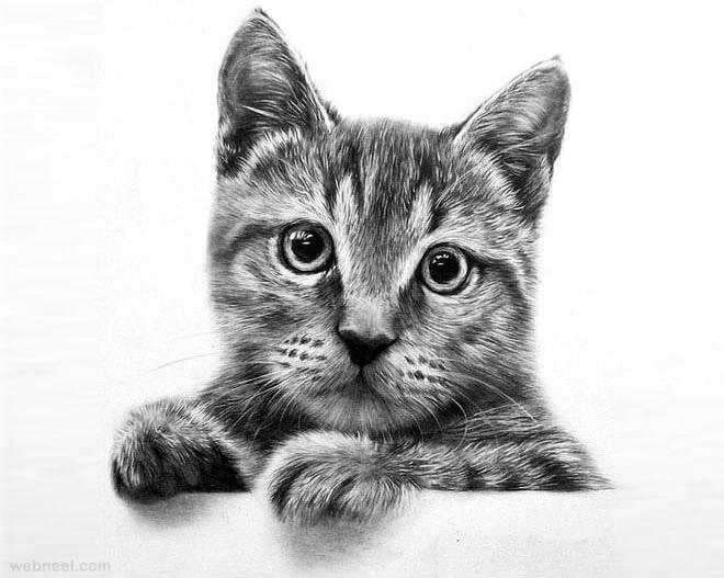 نقاشی گربه با سیاه قلم