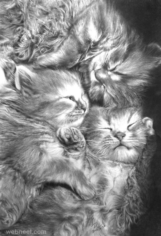 نقاشی از گربه ها