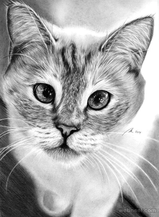 طراحی گربه