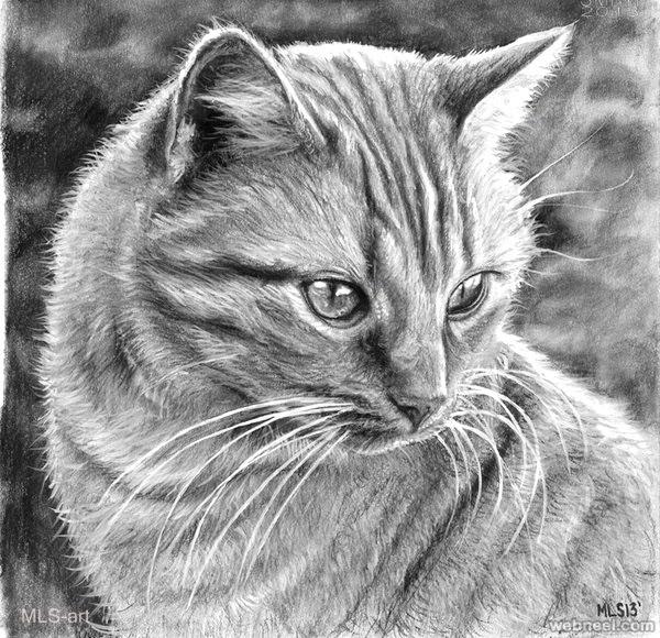 طراحی گربه با سیاه قلم