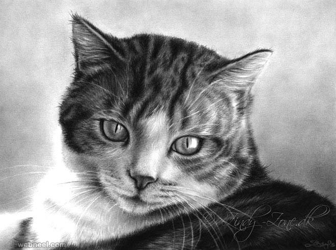 طراحی سیاه قلم از گربه