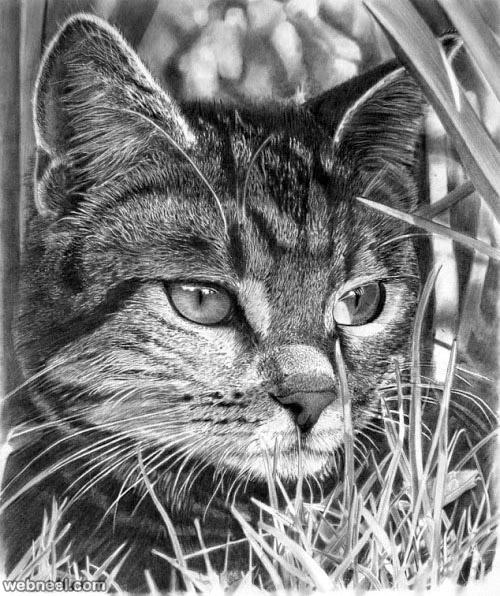 طراحی از گربه با سیاه قلم