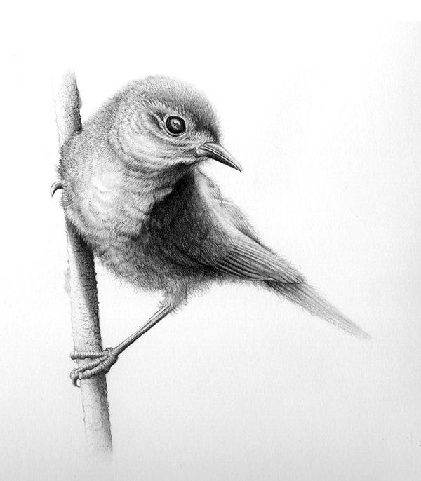 طرح نقاشی پرندگان
