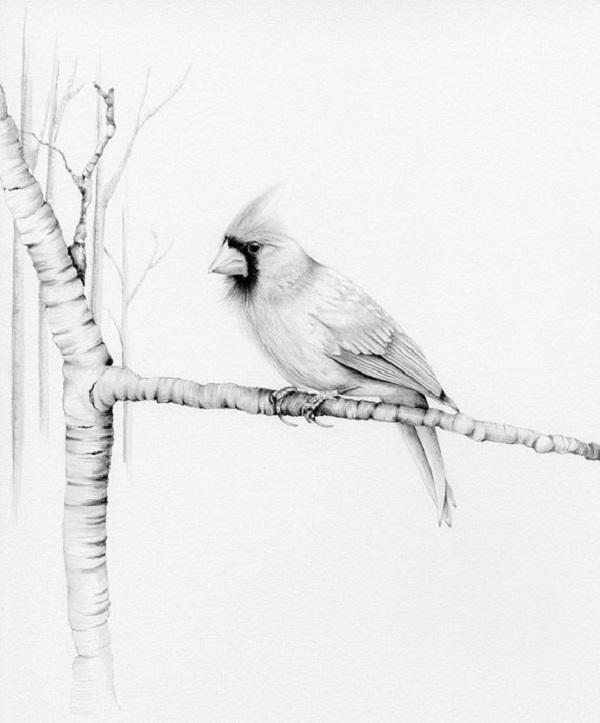 طراحی پرنده روی درخت