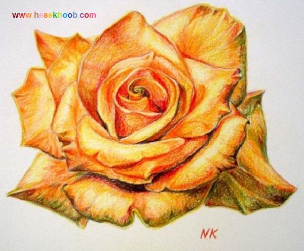 طرح نقاشی گل رز