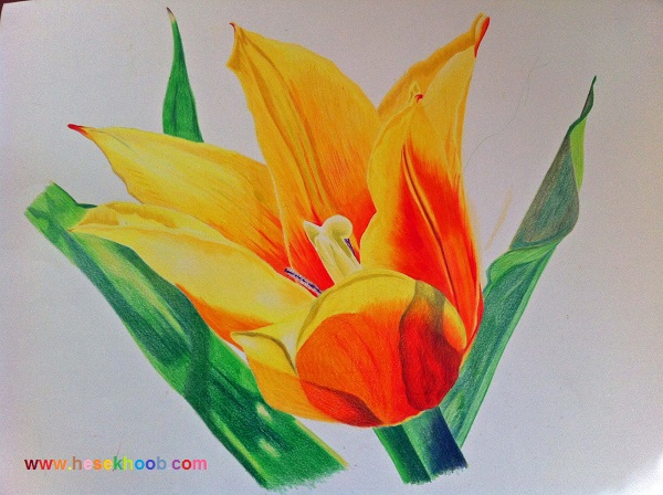 نقاشی گل غنچه