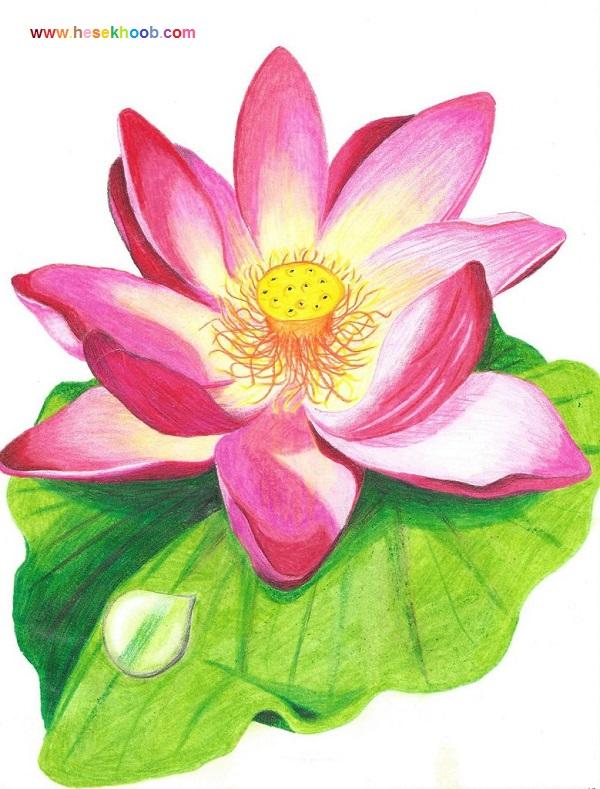 نقاشی گل برای شروع