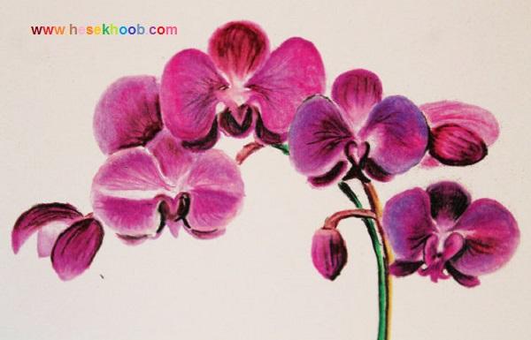 طراحی گل ارکیده