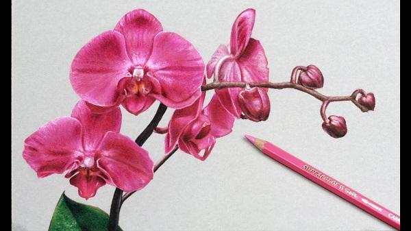 گل ارکیده نقاشی