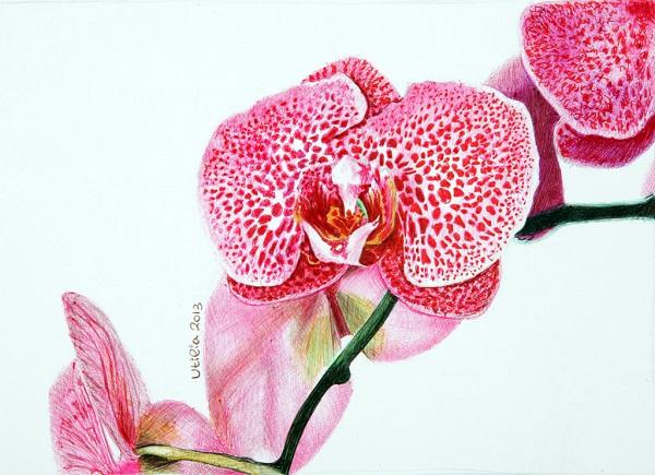 طرح نقاشی زیبای گل