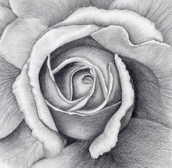 طرح نقاشی گل