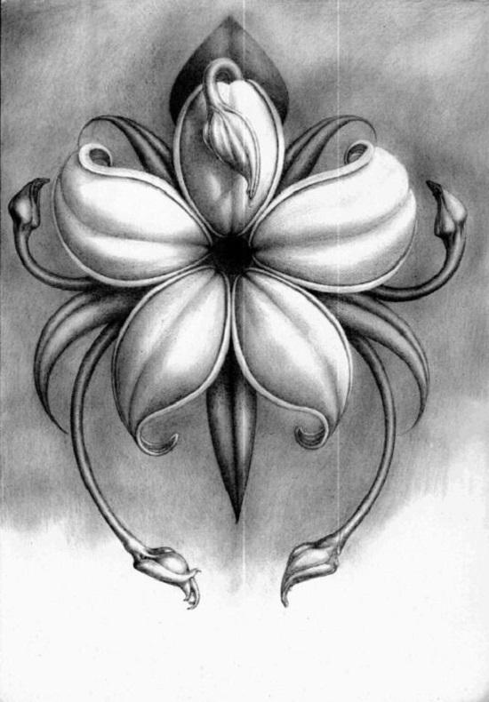 طرح نقاشی گل با سیاه قلم