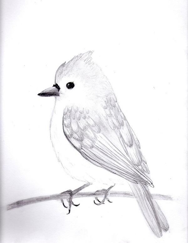 طراحی سیاه قلم پرندگان