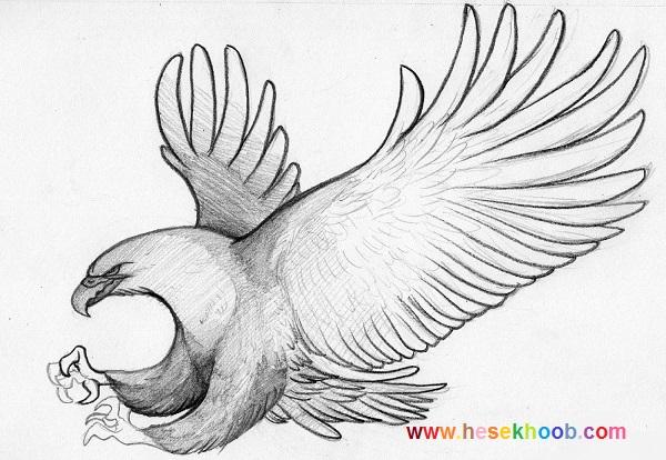 طراحی پرنده ساده