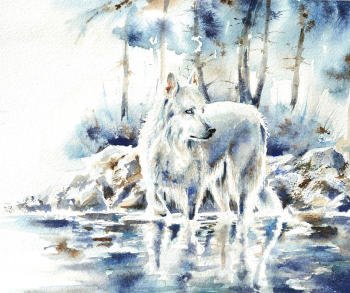 نقاشی گرگ با آبرنگ
